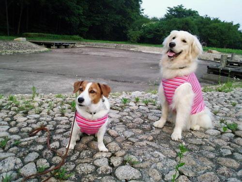 2012長岡公園549