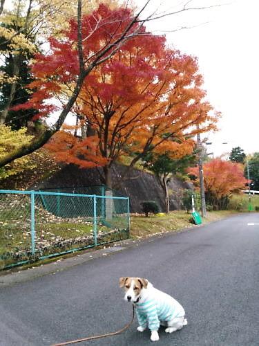 2012近所散歩009