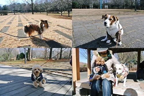 2012長岡公園1014
