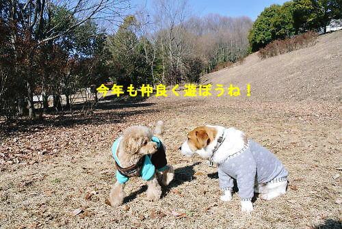 2013長岡公園018