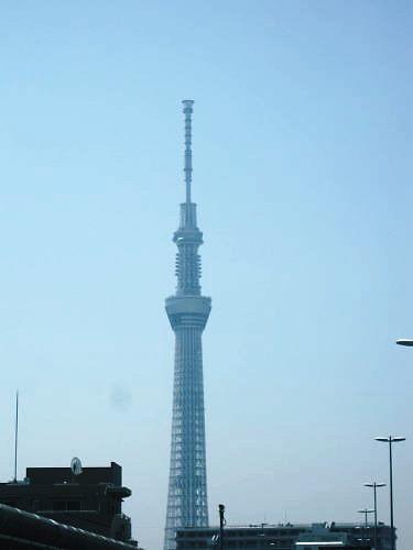 2012草花木045