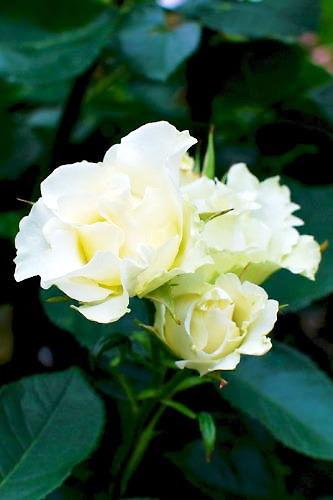 2012草花木059
