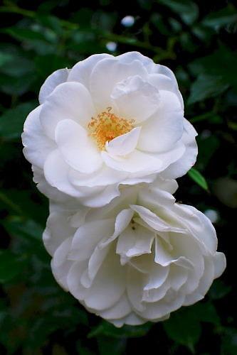 2012草花木057