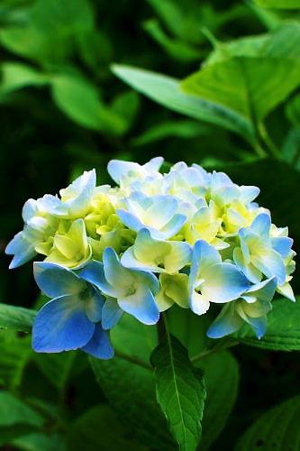 2012草花木065