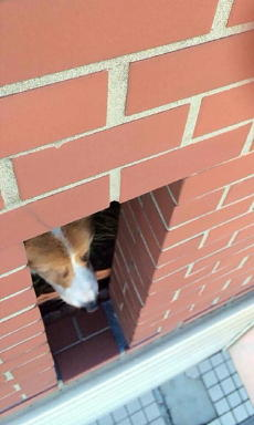 のぞき窓securedownload(1)