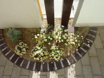 066_庭の花壇