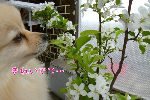0520a_20120521095959.jpg
