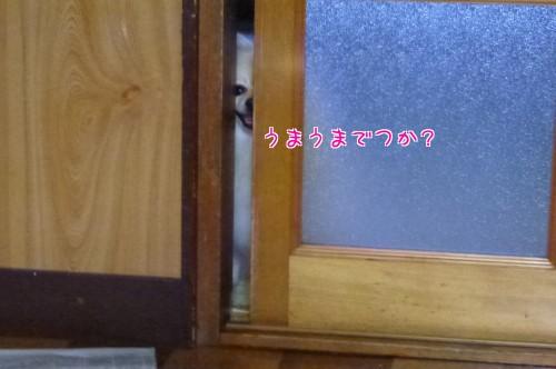 0726d_20120725094019.jpg