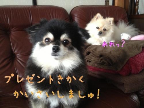 image_20121120103712.jpg