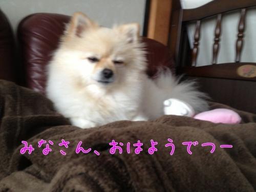 image_20121120103713.jpg
