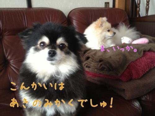 image_20121120103837.jpg