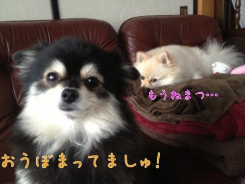 image_20121120103910.jpg