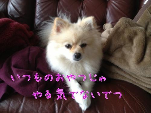 image_20121126104321.jpg