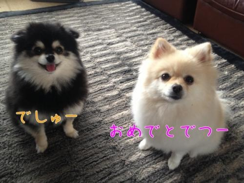 image_20121126104416.jpg