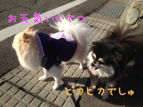 image_20121129125503.jpg