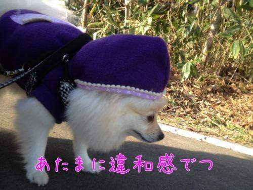 image_20121129125549.jpg