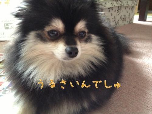 image_20121226153607.jpg
