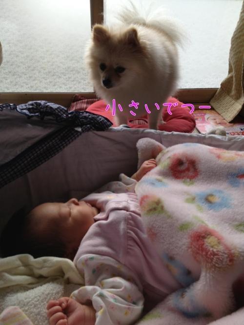 image_20121226153608.jpg