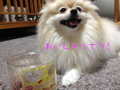 image_20130213093151.jpg