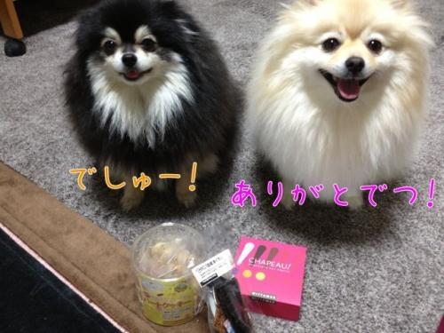 image_20130213093258.jpg