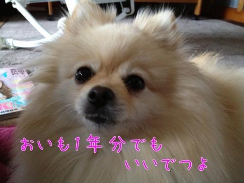 image_20130216185934.jpg