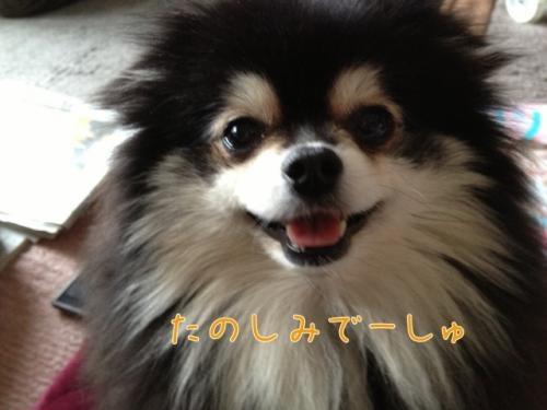 image_20130216190008.jpg