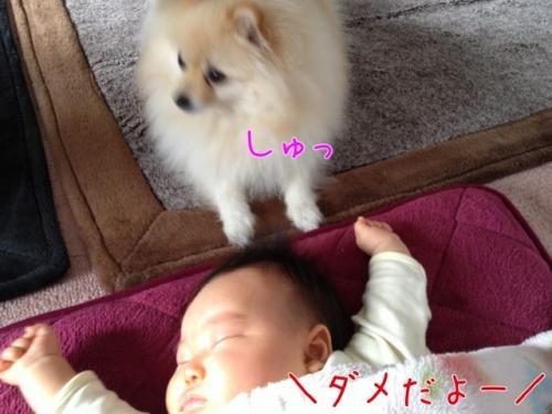 image_20130217202851.jpg