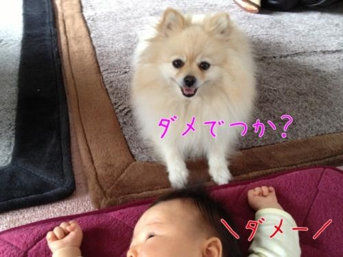 image_20130217202936.jpg