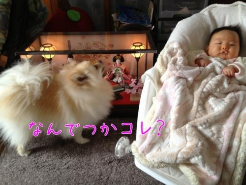 image_20130328140337.jpg