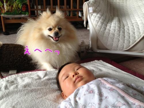 image_20130328140339.jpg