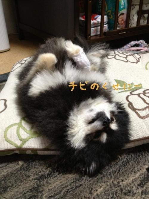 image_20130328140342.jpg