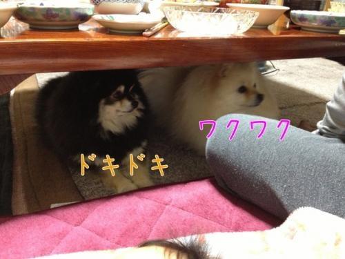image_20130328140604.jpg