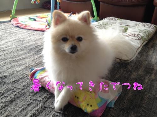 image_20130629212558.jpg