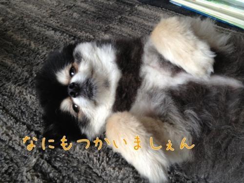 image_20130629212602.jpg
