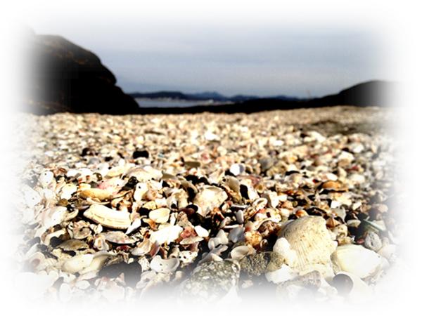 20140103沖ノ島貝がらmini
