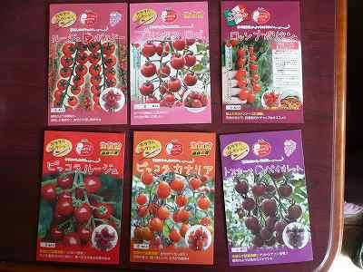 ミニトマトの種 × 6