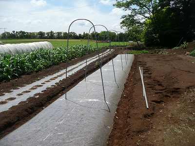 ソバージュ栽培(露地栽培)の準備を開始します
