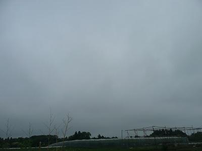 だって連日の曇り空なんだもの