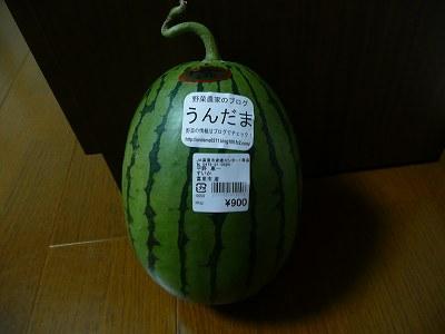 明日出荷する小玉西瓜