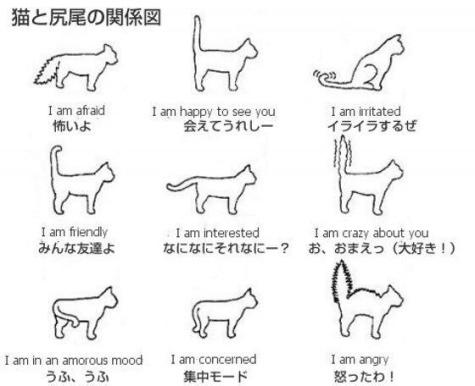 IMG_4428urabanashi.jpg