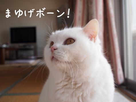 IMG_4475urabanashi.jpg