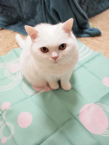 P1171089urabanashi.jpg