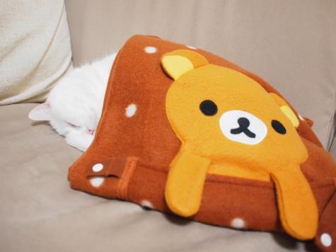 P12717251urabanashi.jpg