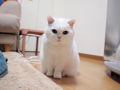 P3193295urabanashi.jpg