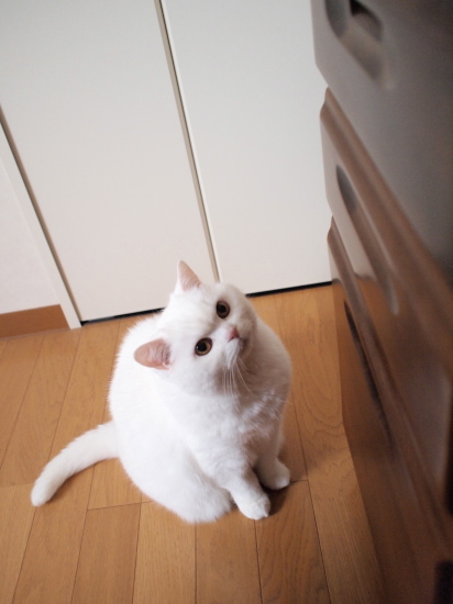 P3203357urabanashi.jpg