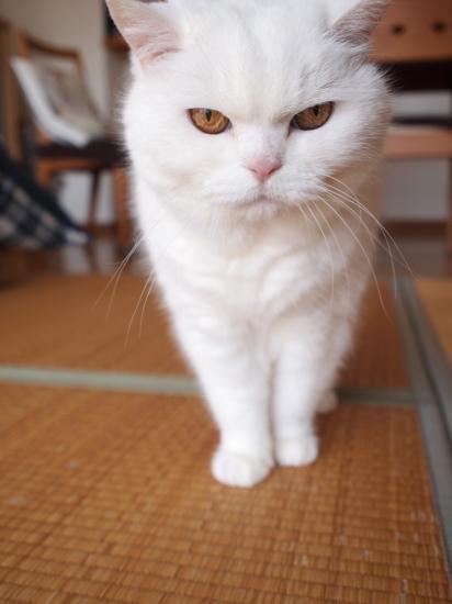 P4134536urabanashi.jpg