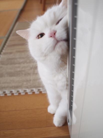 P4214789urabanashi.jpg