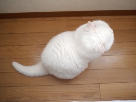 P4295129urabanashi.jpg