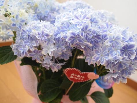 P5035194urabanashi.jpg