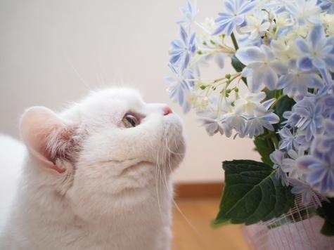 P5035196urabanashi.jpg